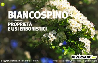 Immagine di biancospino in fiore
