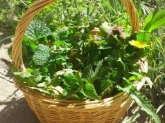 Piante e erbe selvatiche