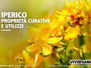 Fiori gialli della pianta di Iperico