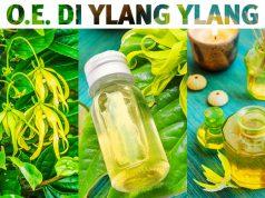 Usi e benefici dell'olio essenziale di ylang ylang