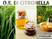 Olio essenziale di citronella: usi e benefici