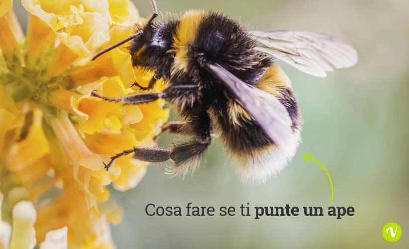 Cosa fare in caso di puntura di api o calabroni - Piastrella scheggiata cosa fare ...