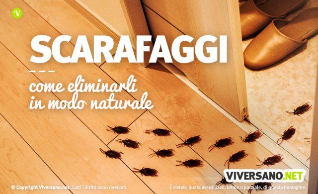 come eliminare blatte e scarafaggi da casa: trucchi e rimedi naturali - Come Eliminare Gli Scarafaggi In Cucina