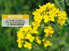 Mustard - depressione