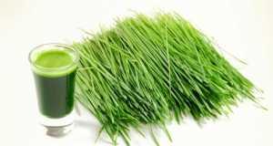 erba di grano benefici