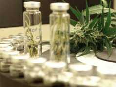 Olio di fiori di canapa a scopo terapeutico