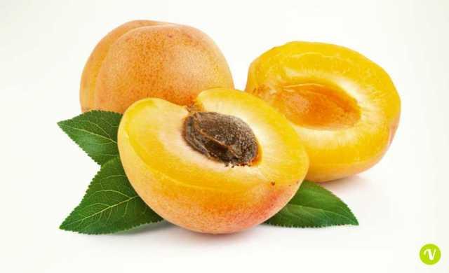 Albicocche e semi di albicocco: proprietà e controindicazioni