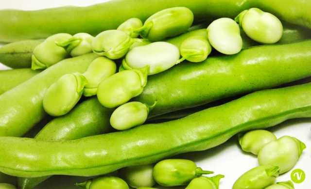 Fave: proprietà nutrizionali