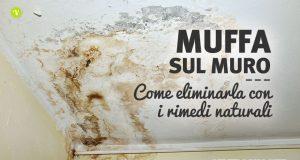 Muffa sui muri come eliminarla con i rimedi naturali
