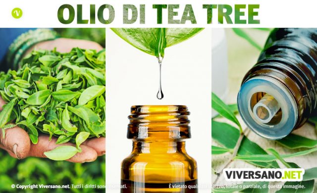 Tea tree oil: usi e proprieta