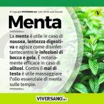 Infografica sui benefici della menta