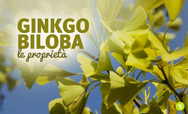 Ginkgo Biloba: proprietà e controindicazioni