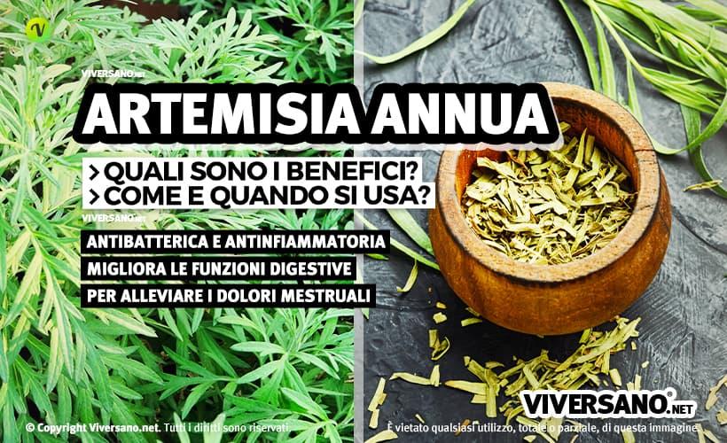 Scopri le proprietà dell'Artemisia annua, l'erba che favorisce la digestione e regolarizza il ciclo mestruale