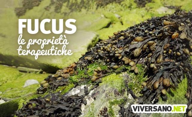Alga Fucus: proprietà e controindicazioni