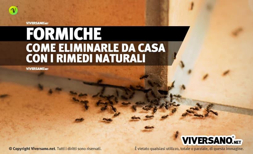 Come eliminare le formiche da casa trucchi e rimedi - Eliminare formiche in casa ...