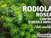 Rhodiola rosea: contro stress, ansia e depressione