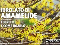Idrolato di amamelide: proprietà e utilizzo per la bellezza