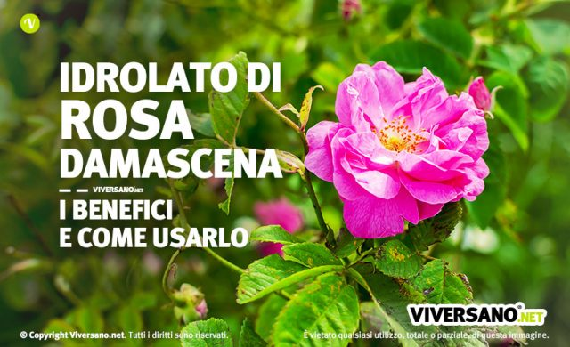 Idrolato di rosa damascena proprieta e uso in bellezza