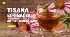 Ricetta tisana echinacea per difese immunitarie