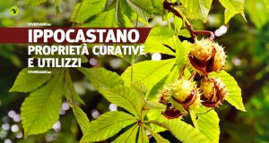 Ippocastano: le proprietà e gli utilizzi in erboristeria