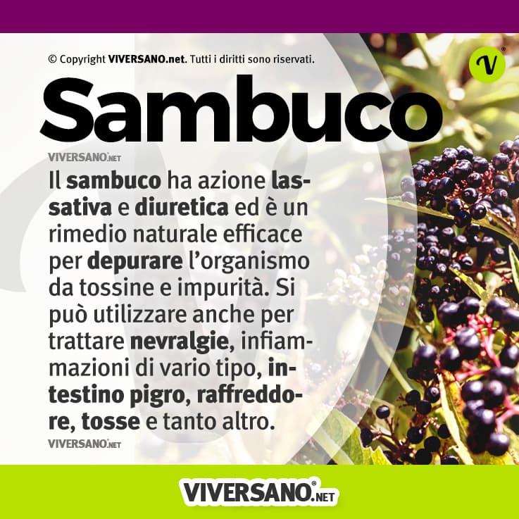 Infografica sulle proprietà del sambuco