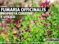 Pianta di Fumaria Officinalis